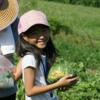有機農園体験